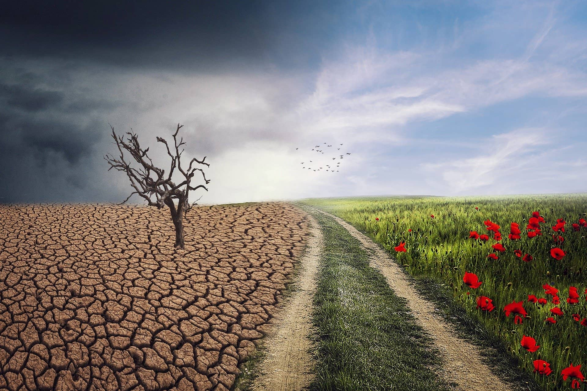 image showing the horror of climate change on a field or the benefit of reducing CO2 and restoring the balance of nature